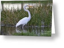 Garza Blanca Greeting Card