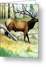Gash Flats Bull Greeting Card