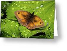 Gatekeeper Butterfly After The Rain. Greeting Card