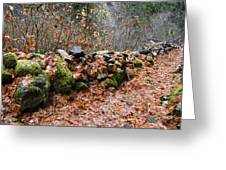 Gather No Moss Greeting Card