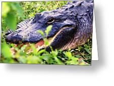 Gator 1 Greeting Card by Marty Koch