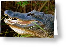 Gator Head Greeting Card