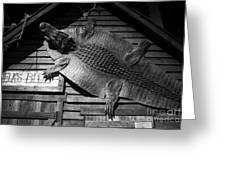 Gator Hide Greeting Card