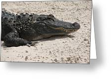 Gator II Greeting Card