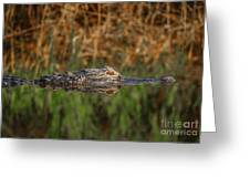 Gator In Canal Greeting Card