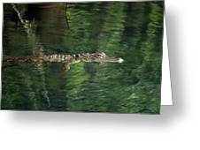 Gator In The Spring Greeting Card