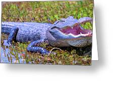 Gator Laugh Greeting Card
