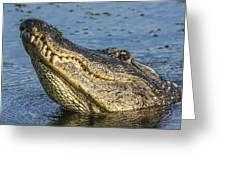 Gator Lean Greeting Card