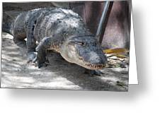 Gator On The Move Greeting Card