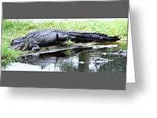 Gator On The Shore Greeting Card