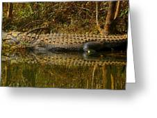 Gator Relection Greeting Card