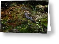 Gator Swamp Greeting Card