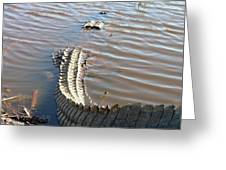 Gator Tail Greeting Card