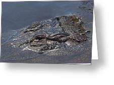 Gator - Too Close Greeting Card