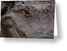 Gators Eye Greeting Card