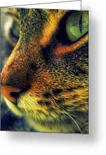 Gatto Greeting Card