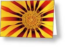 Gazania Greeting Card