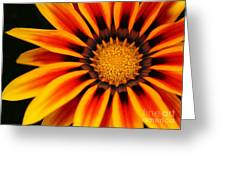 Gazania R Greeting Card