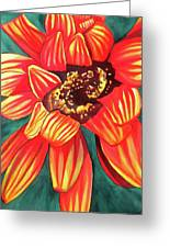 Gazania Greeting Card
