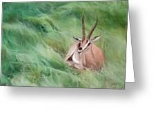 Gazelle In The Grass Greeting Card