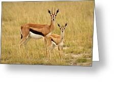 Gazelle Mother And Child Greeting Card