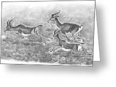 Gazelles Greeting Card