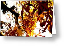 Gazing Into The Autumn Trees Greeting Card