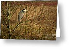 Gbh In A Tree Greeting Card