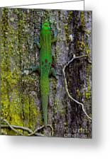Gecko On Tree Bark Greeting Card