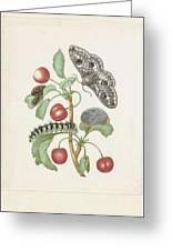 Gedaanteverwisseling Van De Nachtpauwoog  Maria Sibylla Merian  1679 Greeting Card