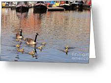 Gees And Goslings 2 Greeting Card