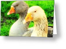 Geese Have Strong Affections For Others In Their Group Greeting Card