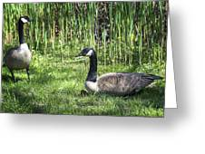 Geese Greeting Card