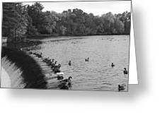 Ducks And Canada Geese On The Charles River Greeting Card