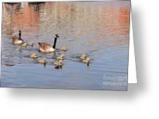 Geese And Goslings 3 Greeting Card