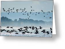 Geese And Gulls Greeting Card