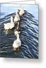 the Geese are leaving Greeting Card