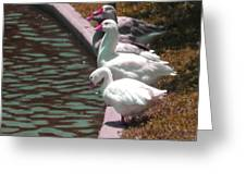 Geese At Guth Park Greeting Card