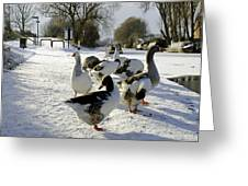 Geese At The Frozen Horninglow Basin Greeting Card