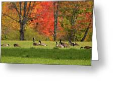 Geese In Autumn Greeting Card
