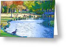 Geese In Pond 3 Greeting Card