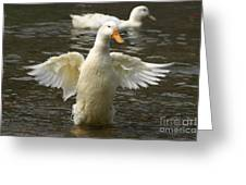 Geese In The Water Greeting Card