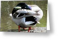 Geese Lovers Greeting Card
