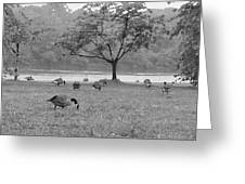 Geese On A Rainy Day Greeting Card