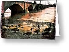 Geese On A Stroll Greeting Card