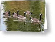 Geese On Pond Greeting Card
