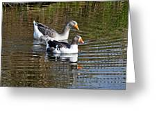 Geese On The Canal   Greeting Card