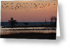 Geese On The Rise Greeting Card