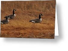 Geese On The Salt Marsh  Greeting Card