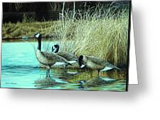 Geese On Watch Greeting Card
